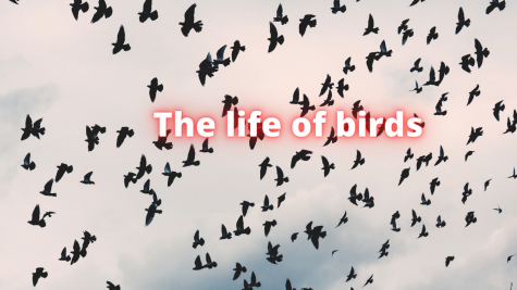 The life of a bird